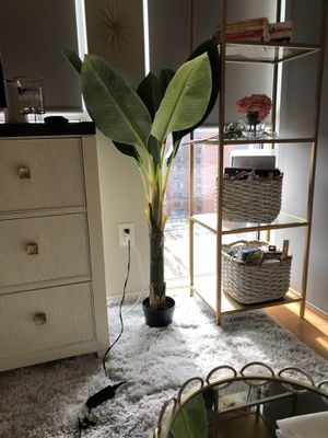 Faux Plant - Banana Tree for Sale in Washington, DC