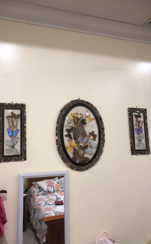 Real Brazilian Preserved Butterflies Frames for Sale in Miami, FL ...