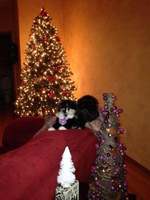 Christmas tree 7.5ft prelit Evergreen Xmas Tree for Sale in Brambleton, VA