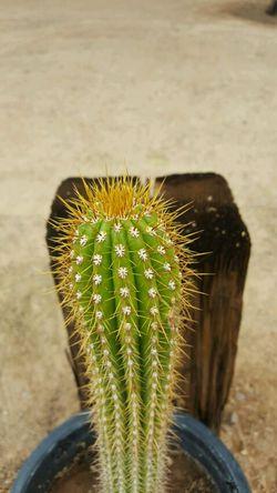 Cactus Thumbnail