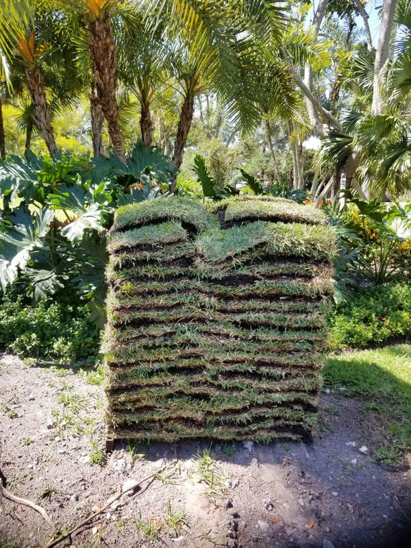 Need Grass Fresh Cut Sod For Sale In Fort Lauderdale Fl