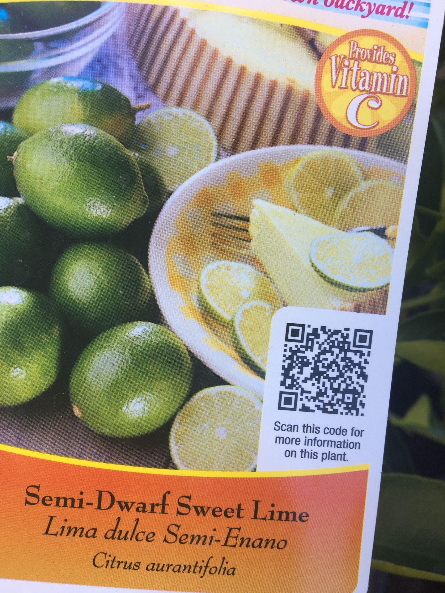 Lima dulce