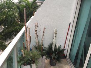 Decorative Plants for Sale in Miami, FL
