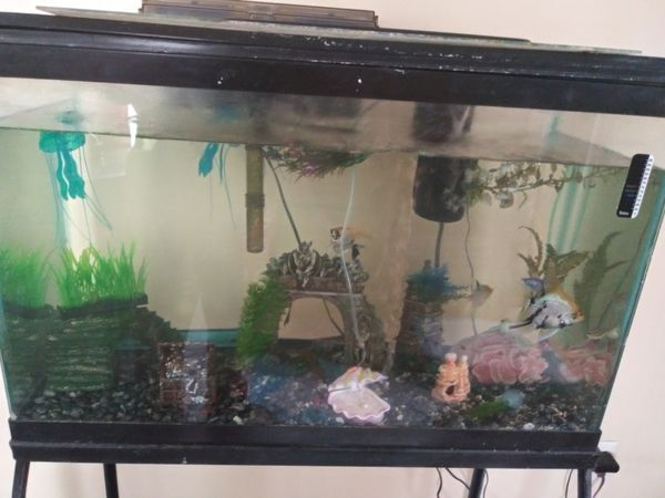 New and Used Fish tanks for Sale in Shelton, CT - OfferUp