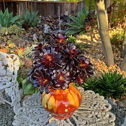 Succulents Thumbnail