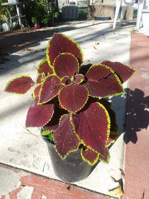 $5 for Sale in San Bernardino, CA