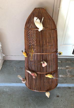 Birds for Sale in Lake Buena Vista, FL