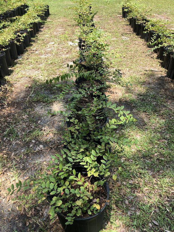 Plants For Sale In Ocala Fl Offerup