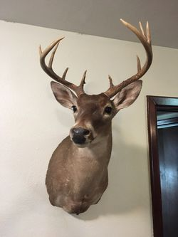 Deer Trophies For Sale Thumbnail