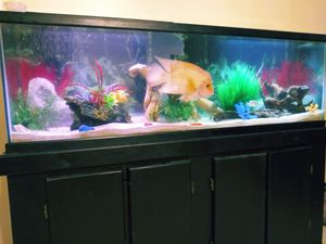 Fish tank for Sale in New Orleans, LA