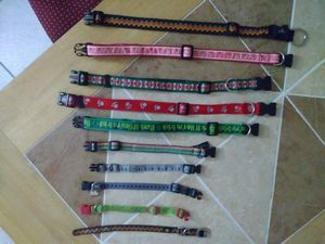 Assorted Dog Collars for Sale in Azalea Park, FL