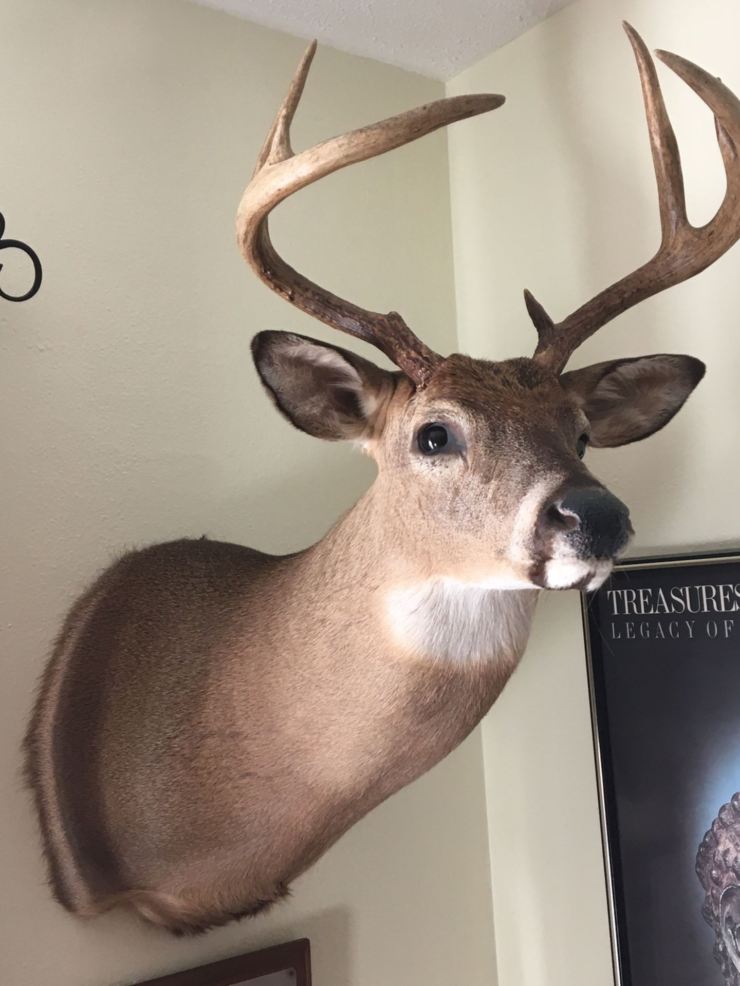 Deer Trophies For Sale