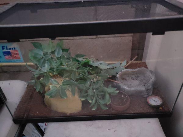 Reptile Terrarium For Small Pet For Sale In Temecula Ca Offerup