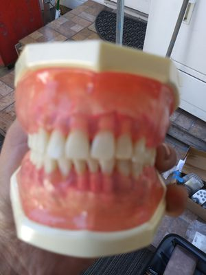 Kilgore dental typodont for Sale in Pasadena, CA