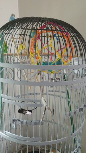 """27"""" w x 67"""" h Extra large Antique Bird Cage for Sale in Annandale, VA"""