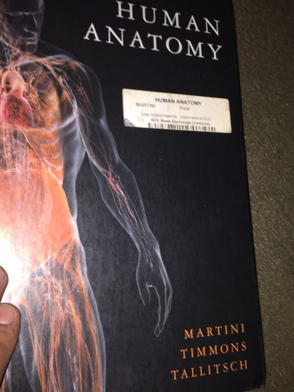 Human Anatomy 7th Edition By Martini Timmons Talli For Sale In