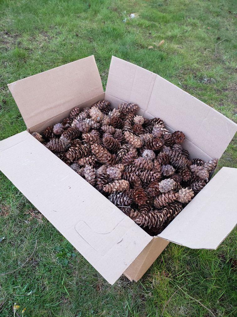 A full box of cones