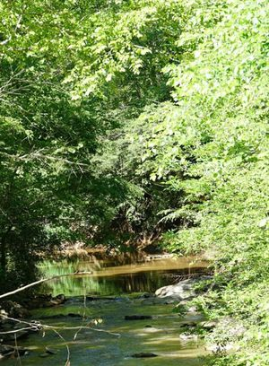 Beautiful 18 Areas for Sale in Gladys, VA
