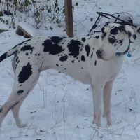 Giantdog2