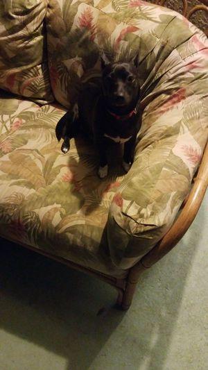 Pet sitting for Sale in Leesburg, VA