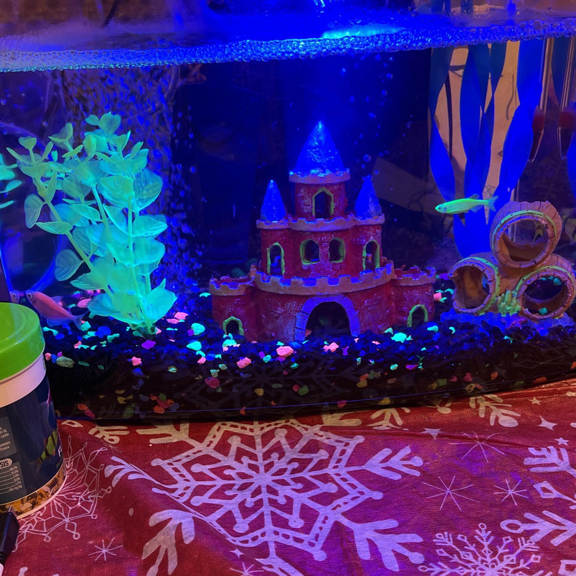 Fish Tank And Kit