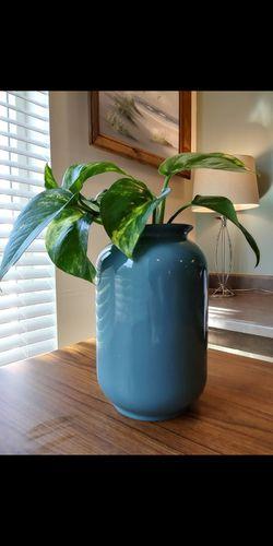 Pretty Vine Plant Air cleaning Blue (B) Thumbnail