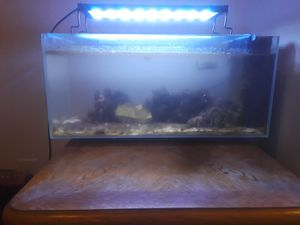15 gallon salt water fish tank w/ led color changing lights for Sale in Austin, TX