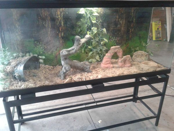 Nice 55 Gallon Snake Reptile Terrarium Complete Plus Stand For