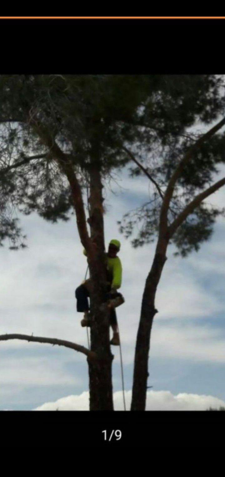 🌲 Tree work 🌲