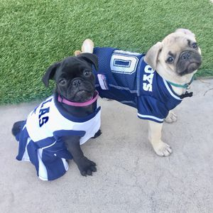 outlet store 507b5 829c7 Dallas Cowboys Puppy Jersey/Cheerleader uniform for Sale in Anaheim, CA -  OfferUp