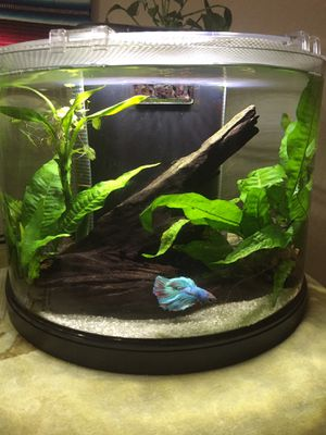 3.5 gallon fish tank with plants for Sale in Orlando, FL