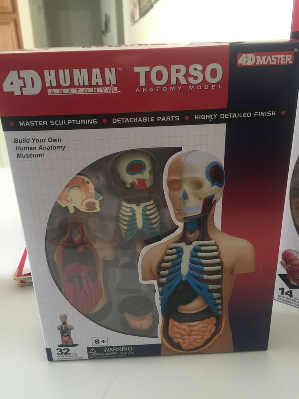 4d Human Anatomy Torso Model Back To School Projects Science For