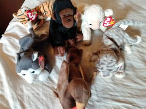 Photo Collectible beanie babies
