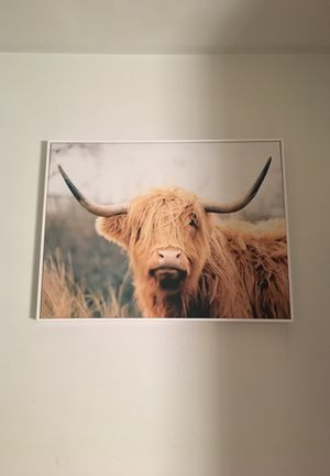 Cow canvas room picture for Sale in Washington, DC