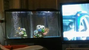 Awesome 55 Gallon Fish Tank With Standdecirationsfiltersled Lights Chemicals Everything