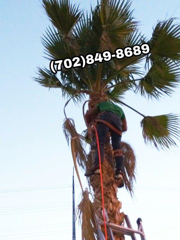 tree palm trees home garden in las vegas nv