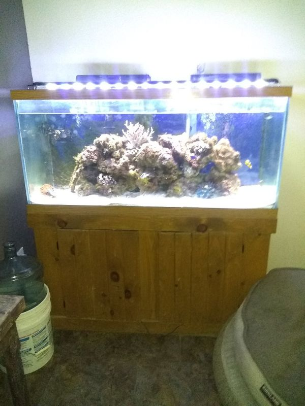80 Gallon Salt Water Aquarium Queen Bed Frame For Sale In