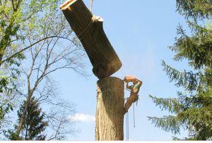 Top Notch Tree Service for Sale in Hyattsville, MD